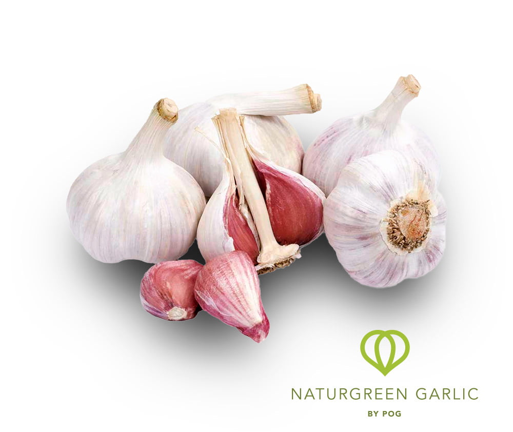 Ajo ecológico - NATURGREEN GARLIC by POG